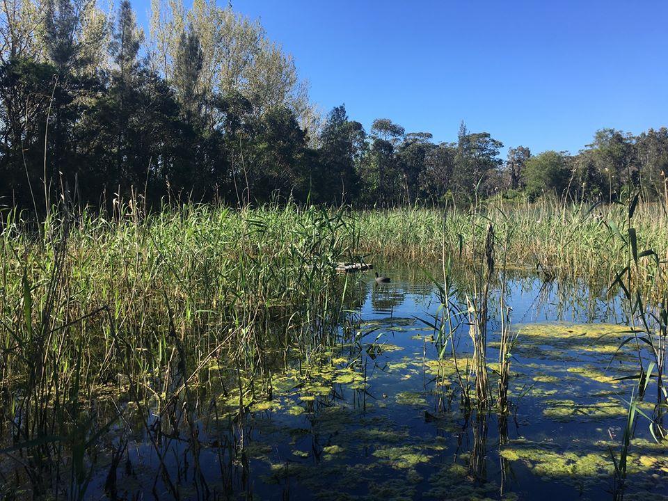 Warriewood Wetlands - Sydney's Most Family-Friendly Walks